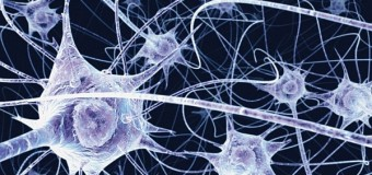 Открытие нейробиологов: когда человек говорит, его мозг отключается