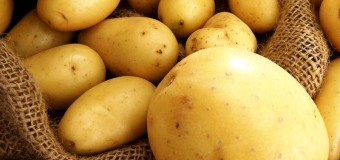 Ежедневное потребление картофеля не увеличивает вес