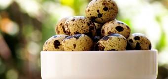 Перепелиные яйца укрепляют нервную систему