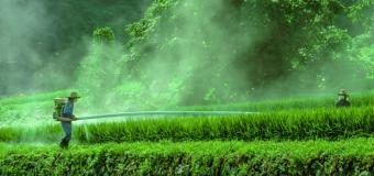 Пестициды приводят к импотенции!