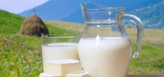 Сыр и молоко помогают мгновенно похудеть