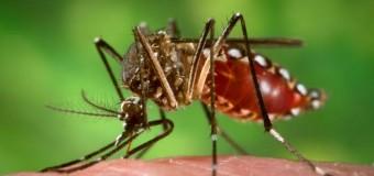 Миру угрожает вспышка лихорадки денге и малярии