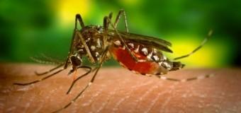 Комары выбирают людей по генам