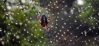 В Австралии ученые обнаружили обезболивающие в яде пауков