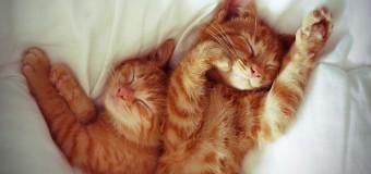 10 правил здорового и полноценного сна