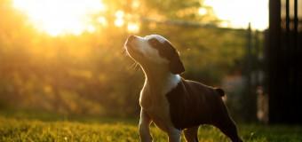 Солнечный свет может защитить от рассеянного склероза
