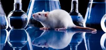 Израильские ученые считают, что ожирение вызывают иммунные клетки