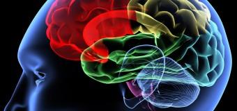 Причина тревоги кроется в орбитофронтальной коре головного мозга