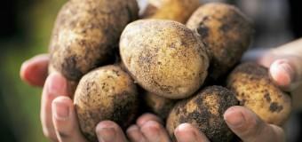 Учёные назвалинатуральные продукты, которые не помогают похудеть