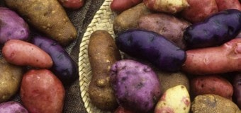 Фиолетовый картофель способен защитить от рака