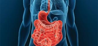 Белок SAP-1 защищает наш организм от кишечных заболеваний
