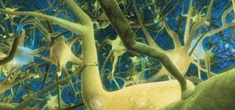 Один нейрон в мозге человека может иметь более 1000 мутаций