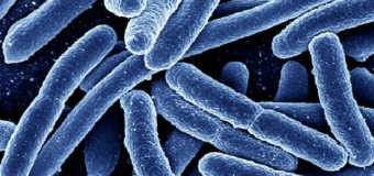 Бактерии общаются между собой так же, как нейроны головного мозга
