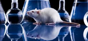 Фруктоза препятствует восстановлению после травмы головного мозга