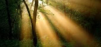 Солнечные лучи могут защитить от рака поджелудочной железы