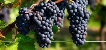 Особый вид вина поможет быстро убрать лишний жир