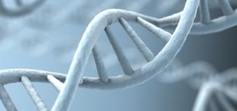 Канадские специалисты обнаружили генетическую причину ожирения