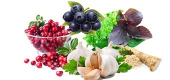 8 лучших природных антибиотиков