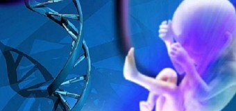 Расшифрованы гены, активирующиеся после оплодотворения яйцеклетки