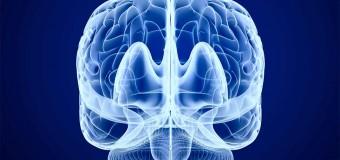 Сканирование мозга может предсказать рецидив депрессии