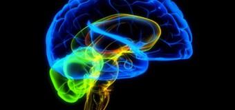 Учёные: Зрительная кора головного мозга может принимать решения