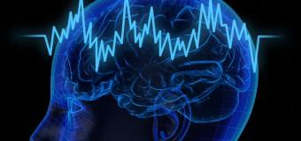 Уровень интеллекта зависит от структуры мозга, а не от его объема